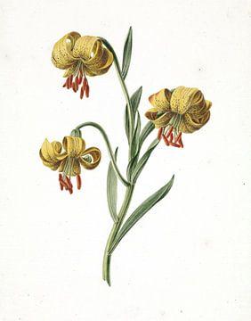 Tak met drie gele lelies van M. de Gijselaar, 1834.jpg