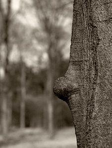 Bump Tree