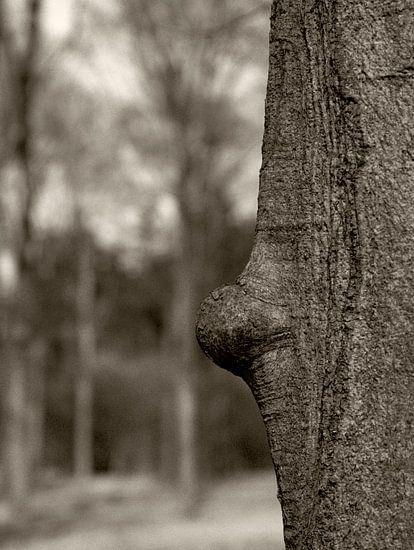 Bump Tree van Cor Ritmeester