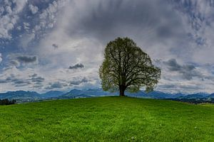 Lime, Wittelsbacher Höhe