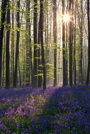 Magic wood van Elena Jongman