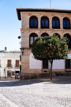 De sinaasappelboom van Ennio Brehm