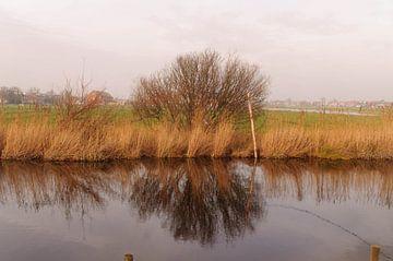 reflexie van een boom  von Robert Lotman