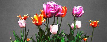 Tulpen auf grau. von Freddy Hoevers