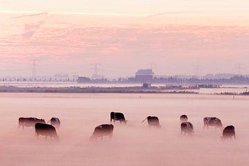 Koeien in de mist op Voorne Putten sur Roel Dijkstra