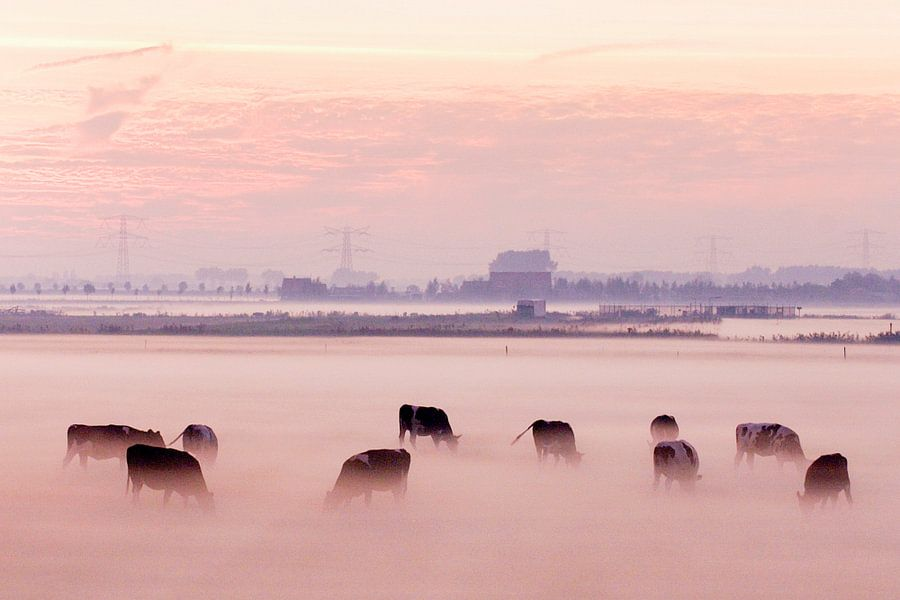 Koeien in de mist op Voorne Putten van Roel Dijkstra