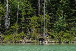 Eenzame beer