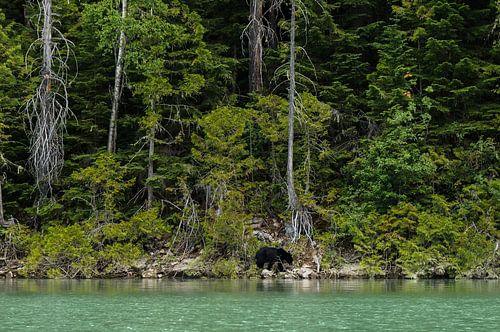 Eenzame beer van Joris Pannemans - Loris Photography