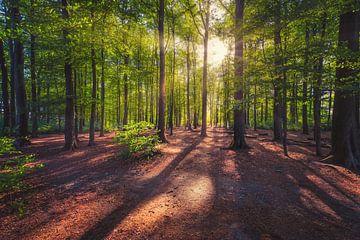 Forest 02 van Aron Nijs