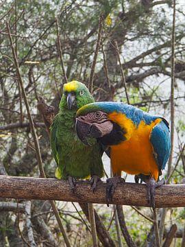 Twee wilde papegaaien van Sanne van der Stoel