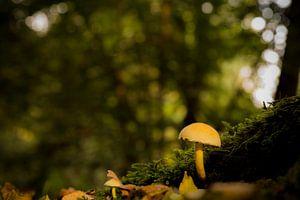 paddenstoel in het bos van