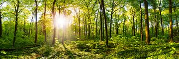 Zonsopgang in het bos van Günter Albers