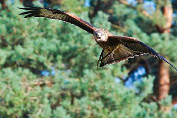 Vogel von Joep Deumes