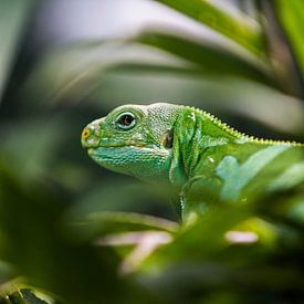 Groen Reptiel van Jaap van Lenthe