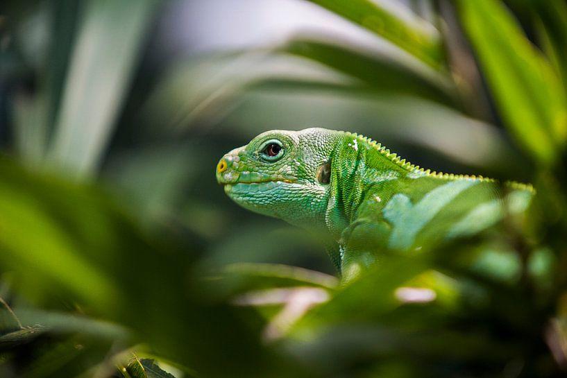 Groen Reptiel in Bali van Jaap van Lenthe