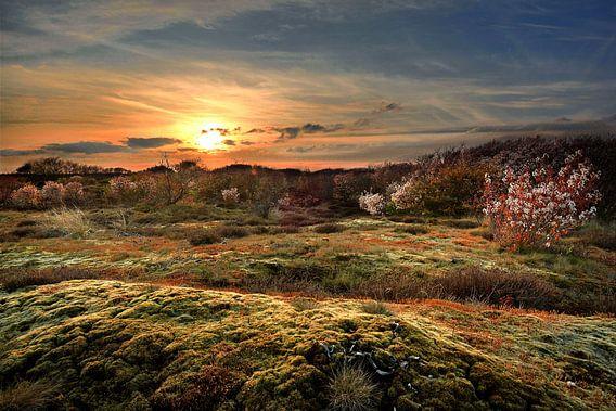 Texel in het voorjaar van John Leeninga