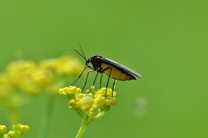 Insect van Frank de Ridder