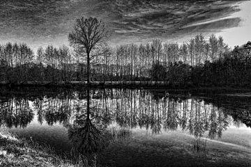 Bomen  in zwart-wit von Yvonne Blokland