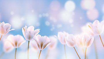 witte tulpen in de zon van Dörte Stiller