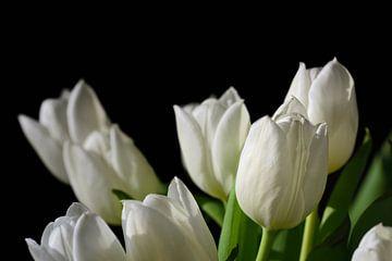 Witte tulpen bloeien tegen een zwarte achtergrond van Ulrike Leone