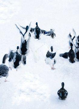 Bild von Enten im Schnee. von Therese Brals