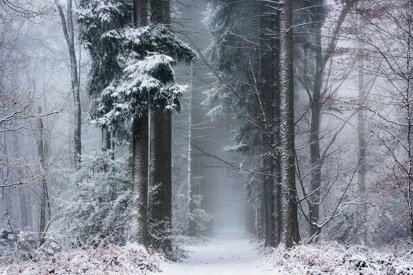 White Magic. van Inge Bovens