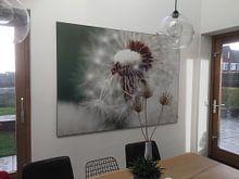 Kundenfoto: Paardebloem von Falko Follert, als akustikbild