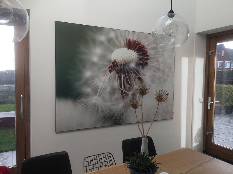 Kundenfoto: Paardebloem von Falko Follert