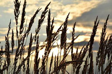 Schilf bei Wind im Sonnenuntergang von Marcel Ethner