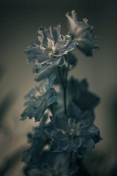 Blume #6 von tim eshuis