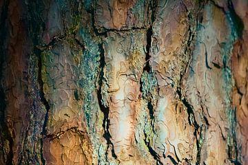 Farbe Rinde von Kim van Beveren