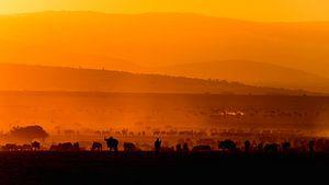 Migratie bij zonsopgang