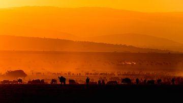Migratie bij zonsopgang von Carol Thoelen