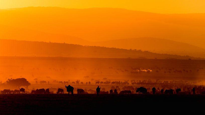 Migratie bij zonsopgang van Carol Thoelen