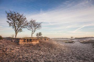 Zandverstuiving op het Dwingelderveld
