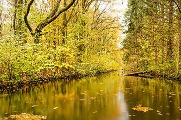 Spiegelung im Gewässerwald