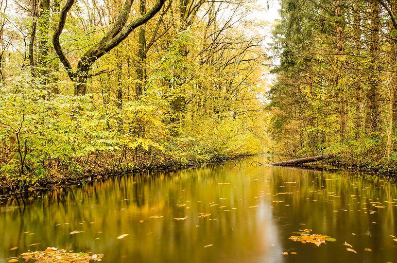 Reflectie in het Waterloopbos van Frans Blok