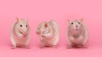 Drie kleine ratjes van Elles Rijsdijk