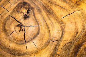 Oud hout van Cor Pot