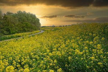 Prairie naturelle