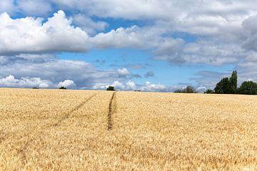 Graanveld met tractorspoor in Limburg van