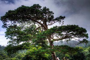 Tree overlooking Muckross Lake, Killarney National Park, Ireland