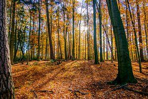 Last Leaves are falling sur Emel Malms