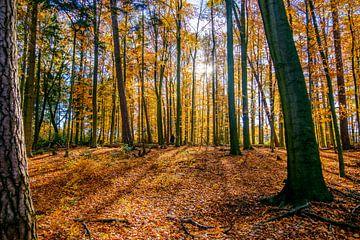 Last Leaves are falling van Emel Malms