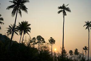 Palmen und Urwald im Sonnenuntergang, Koh Chang, Thailand von Annette Sandner