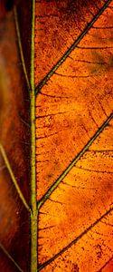 Squelette de feuilles rouillées