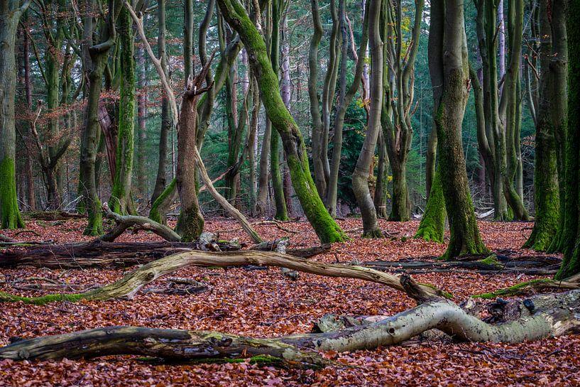 Dansende bomen Speulderbos van Mario Brussé Fotografie