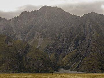 Eenzame boom in Arthur's Pass National Park, Nieuw-Zeeland van J V