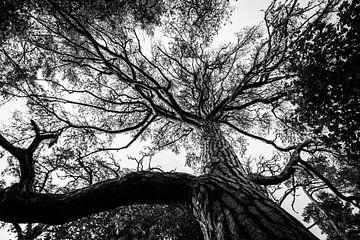 Zwart wit boom van Ellis Peeters