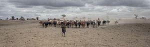 Masai Herd van